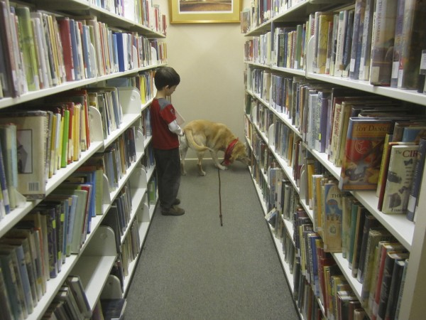 Adam watches Atticus succeed in sniffing out a dog treat on the library shelves