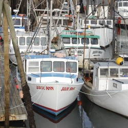 Cobscook Bay fishermen say scallops too small to fish