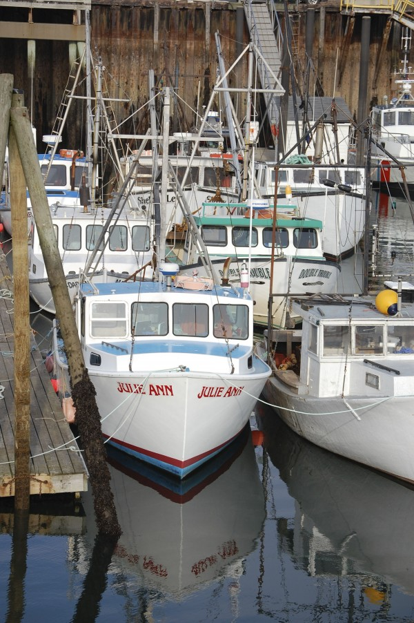 With much of Cobscook Bay declared off limits this week to scallop fishing, there was no shortage of boats tied up Thursday at the wharf behind the Eastport breakwater. Boats dragging areas of the bay that remain open are reporting catches well below the daily limits of 135 pounds.