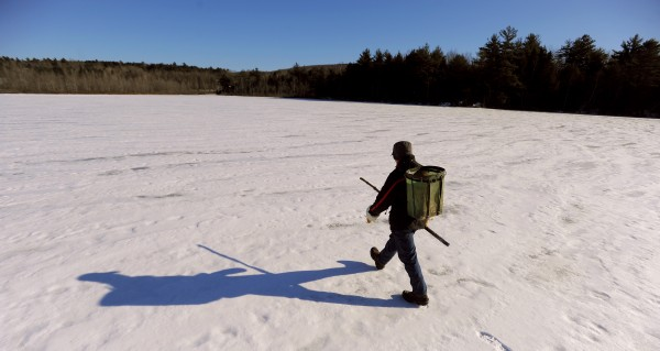 Bob Martin walks across the frozen George Pond in Dedham. He set several beaver traps but didn't catch anything there that day. &quotThat's OK. It's a nice day for a walk. Even when I trap the beavers out of an area, they are back in a year or two,&quot he said.