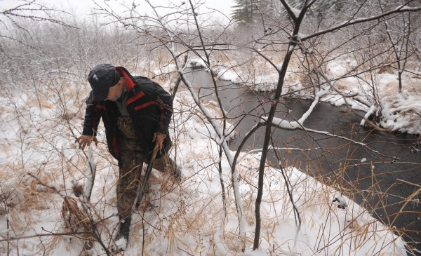 Bob Martin walks along a stream in Otis in search of fresh signs of beaver activity. He spends a considerable amount of time and energy finding the areas where the animals are active.