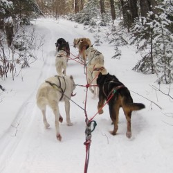 Snow and cold make for a great dog sled racing season