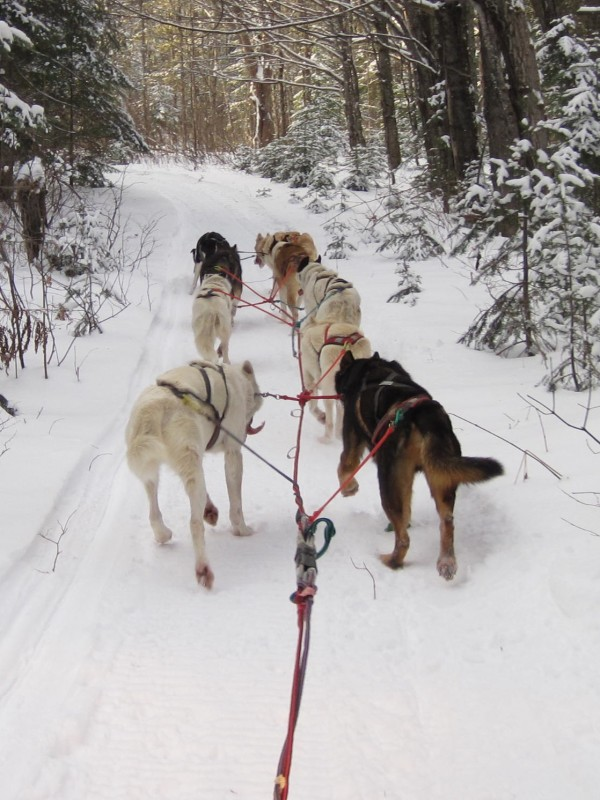 Snowfall totals may be down in the St. John Valley, but consistent cold temperatures mean what snow has fallen is packing into hard, fast trails to safely run sled dogs.