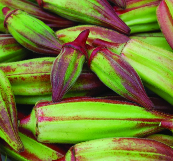 A number of Okra varieties are available from Seed Savers Exchange, including 'Hill Country Red.'