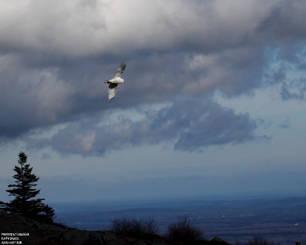 Soaring in the sky above Cadillac Mountain.