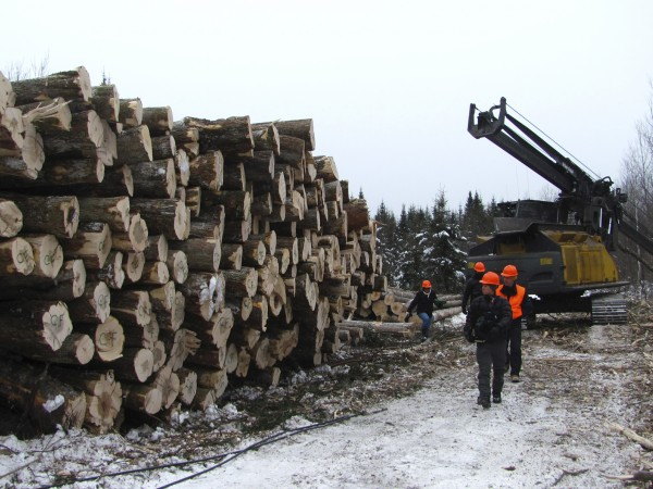 Members of a film crew and The Nature Conservancy staff in Maine walk by a wall of timber awaiting shipment to mills on Thursday, Jan. 12, 2012.