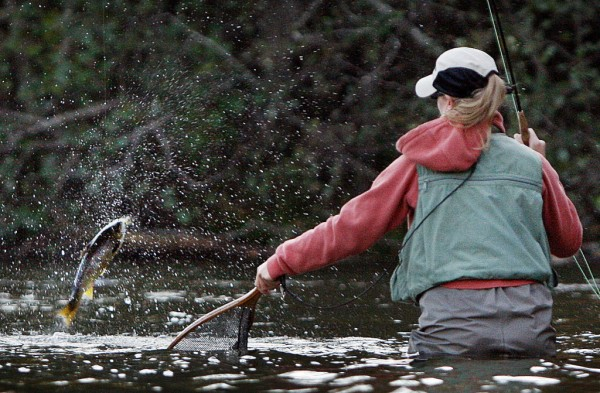 Kristy Pressey of Waterville prepares to net a feisty salmon in the Hatchery Pool at Grand Lake Stream.