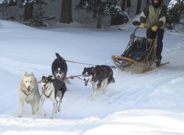 When it comes to running dogs, nothing beats the feel and satisfaction of a good  team hooked onto a dogsled.