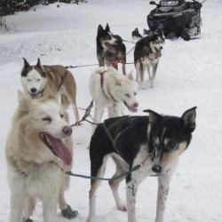 At the mushing crossroads: Gee, or haw?