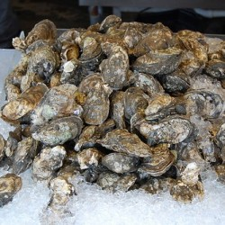 Man proposes 50-acre Trenton oyster farm