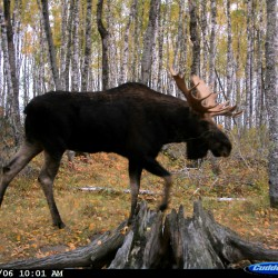 Outdoors tips: You have to protect your trail cameras from thieves