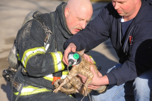 Bangor firefighter Bruce Johnson (left) and Eric Pelletier put an oxygen mask on a cat that was injured in a fire at 26 Market St. in Bangor on Friday afternoon.