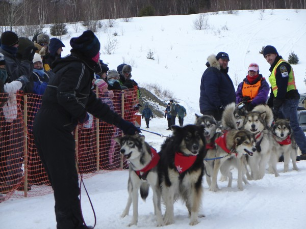 Lidia Dale-Mesaros of Campton, N.H., waits for the countdown to the 30-Mile Wilderness Sled Dog Race held in Greenville in 2010.