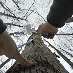 Sap, syrup already flowing at Maine maple sugarhouses