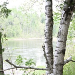 On the Bank of the Aroostook River