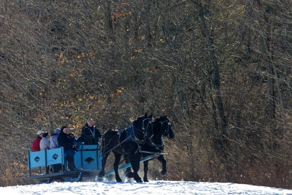 The sun shines on bare trees and a team of draft horses on Sunday, Feb. 19, 2012 at the 19th annual World's Greatest Sleigh Ride in Lisbon.