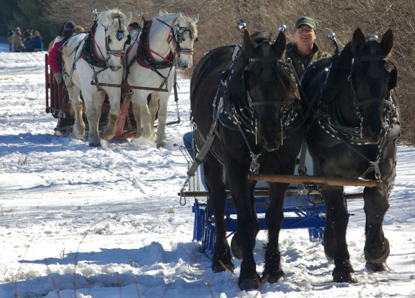 Three of more than a dozen teams of draft horses trot across the snow on Sunday, Feb. 19, 2012 at the 19th annual World's Greatest Sleigh Ride in Lisbon.