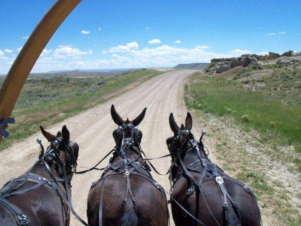 A mule's eye view of Nick and Rinker Buck's wagon.