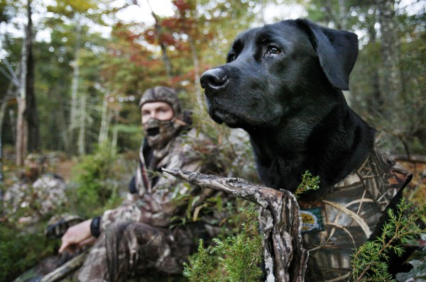 Gauge, a Labrador retriever, wears a camouflage vest while watching for ducks with his master, Jeremy Lee, of South China, while duck hunting in Bath on Oct. 15.