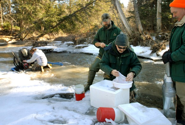 Paul Christman (center kneeling) and Peter Ruksznis (left), both fisheries biologists with DMR, open a container of Atlantic salmon eggs to be planted in Cove Brook in Winterport on Jan. 26, 2012.