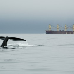 Panel links underwater mapping sonar to whale stranding for first time