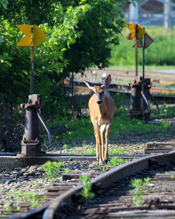 Hanging out on the tracks.
