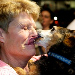 Beau remains champion of Portland's Valentine's Day Canine Kissing Contest