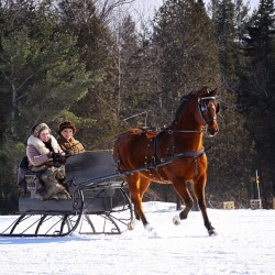 Sleighs dash through the snow in Palmyra