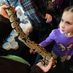 Snakes, lizards and more on display at Northeast Reptile Expo