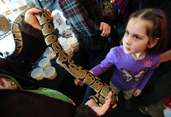 Hannah Baxter, 6, of Bangor strokes a ball python beloning to Kelsey Oakes of Orono during the Bangor Reptile Expo on Sunday, Feb. 19, 2012.