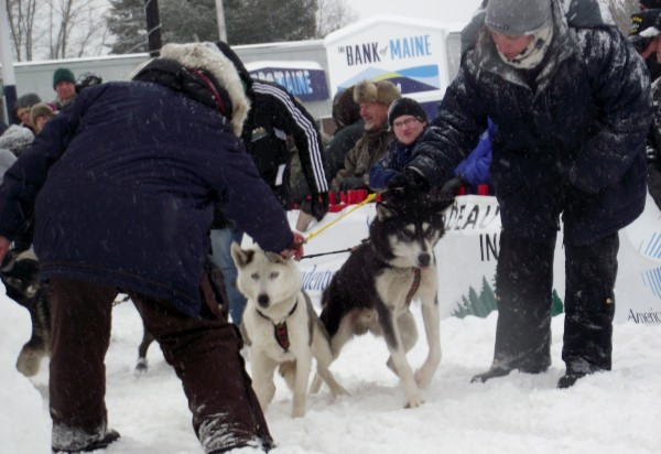 Volunteers at the Can Am Crown International Sled Dog Races in Fort Kent help a musher keep his excited dogs from taking off before the official start time on Saturday, March 3, 2012. There are 63 mushers taking part in the 20th race.