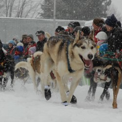 Musher contending to be first-ever female 250-mile race winner