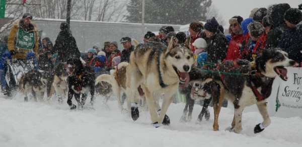 Teams run through up to 10 inches of new snow Saturday, March 3, 2012 at the start of the Can Am Crown International sled dog races in Fort Kent. CAC 250 winner Ryan Anderson arrived in Fort Kent at 8:10 Monday morning.
