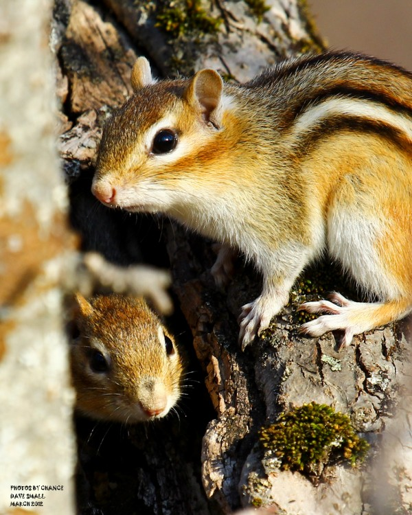 Chipmunks looking for a private moment.