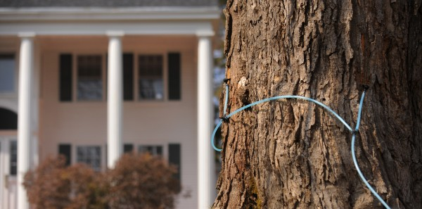 A maple tree is tapped in the front yard of an Orono home on Monday, March 19, 2012.