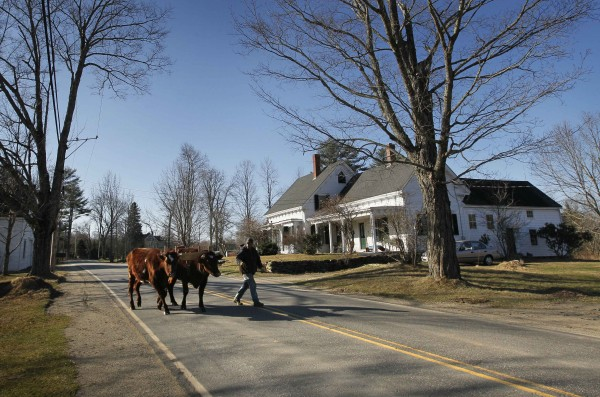 Mike Sproul leads his Red Durham steers, Bright and Star, across the road at his farm, Tuesday, March 27, 2012, in Waldoboro, Maine. Sproul is the seventh generation of his family to work the land on his family's 220 acres.