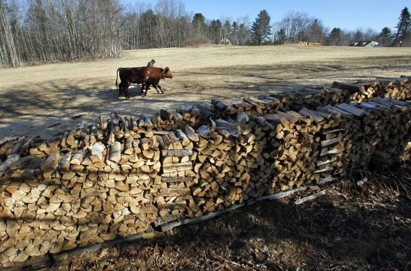 Several cords of firewood season in a field as Mike Sproul leads Bright and Star back to the barn after a morning spent twitching logs, Tuesday, March 27, 2012, in Waldoboro, Maine.