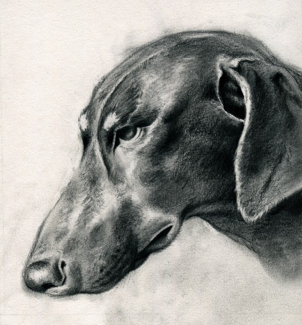 An illustration of the author's dog, Red.