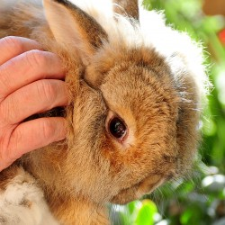 Rescuing rabbits keeps Lamoine woman hopping, hoping for help