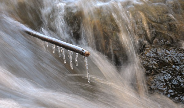 The water of the Kenduskeag Stream rushes by a branch on a frosty morning last week.