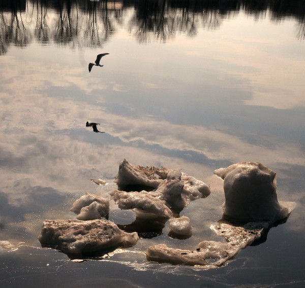 Ice floats down the Penobscot River on Monday, March 19, 2012.