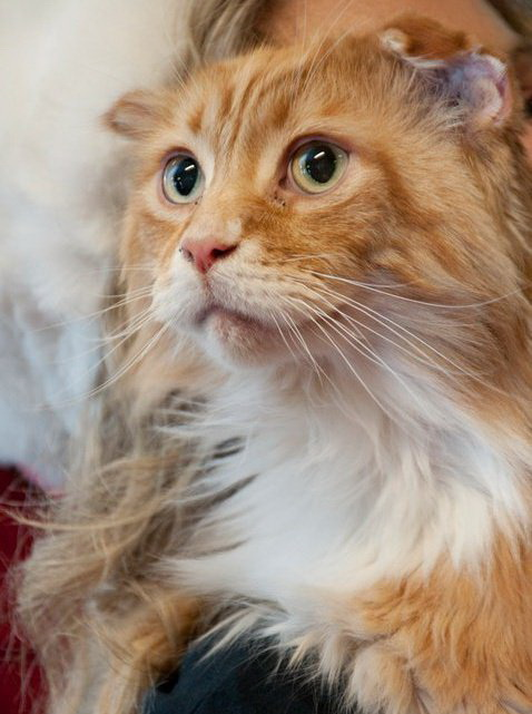 The public is invited to a housewarming party with special guest Togus the Cat in celebration of the Humane Society of Knox County's new cat care facility on March 17 from 1:00 - 4:00.