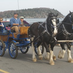 Rockland homes get farm-fresh foods by horse-drawn carriage