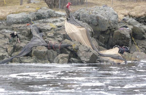 Fishermen set their elver nets just below Bad Little Falls in the Machias River at Machias in March 2010 on the first day of elver season. Elvers, also called glass eels, are immature eels that come in from the sea to mature in fresh water.