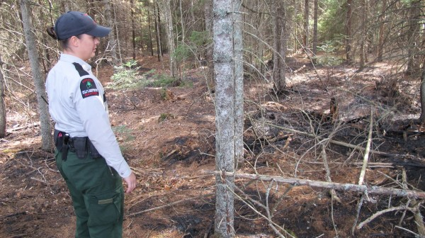 Forest Ranger Jasmine Hammond with the Maine Forest Service's office in Jonesboro looks over a wooded area that was purposely set on fire in the Columbia Falls area on Friday, March 23, 2012. The suspected arson was extinguished with minimal damage thanks to a fast response by rangers and local fire crews. Spring and summer are busy times for forest rangers due to fires.