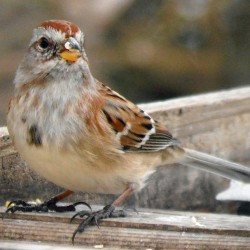 Spring raises illness potential at bird feeders