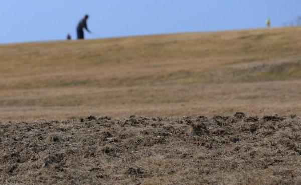 A patch of ground at Penobscot Country Club in Veazie, as seen Monday, March 19, 2012, has been torn up by crows searching for grubs in the dirt.