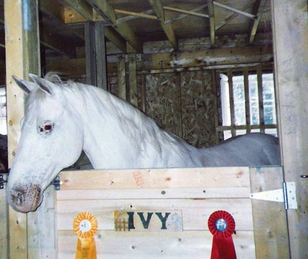 The author's first horse, Ivy, was an Appaloosa mare.
