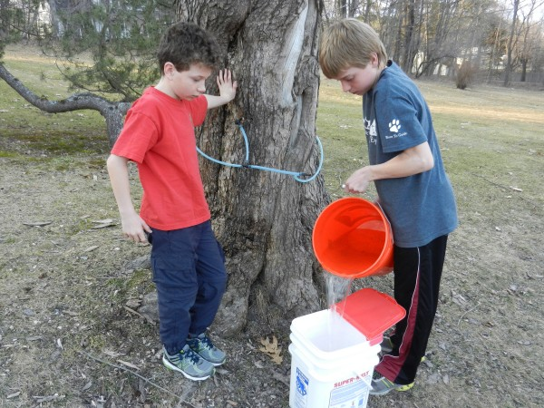 Dan Palmeter (left) watches one of his brothers, Josh Palmeter, pour freshly tapped sap from their neighbor's tree into a collection bucket near their home on Main Street in Orono after school Monday, March 19, 2012.