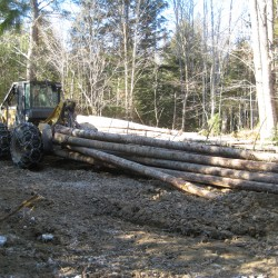State plan to increase timber harvesting on public lands hits resistance